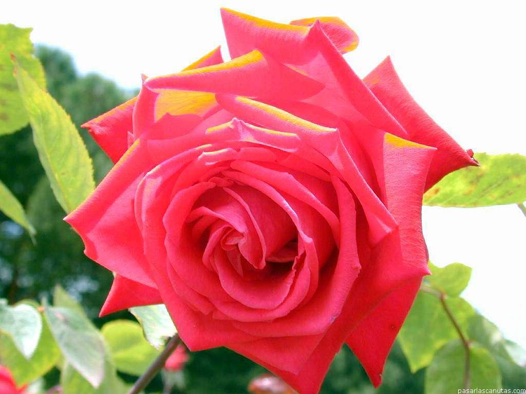 Dia internacional de la mujer y porque s lo un d a e for Plantas decorativas con sus nombres